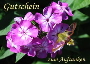 taubenschwaenzchen-seite1